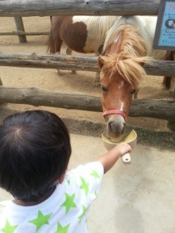 ジェイと馬