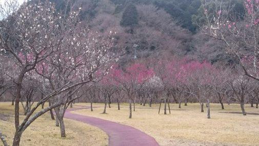 Photo_17-02-14-11-47-02.763
