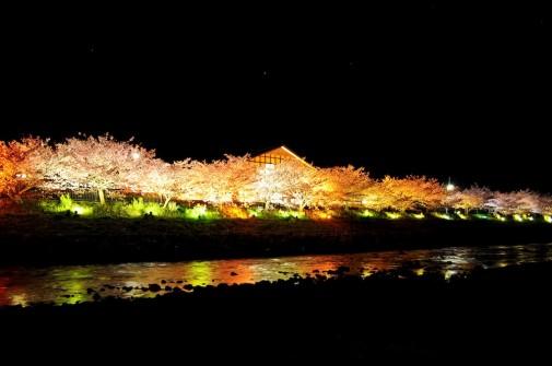 峰温泉夜桜ライトアップ