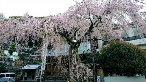 連慶寺0409