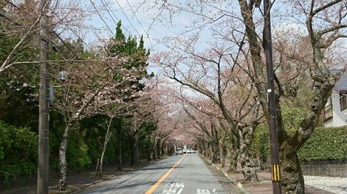桜並木 (002)