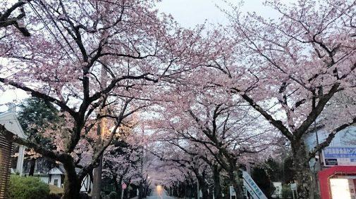 桜並木 0409
