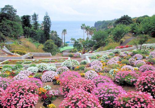 四季の花公園