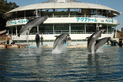 海上ステージイルカショー【下田海中水族館】-5