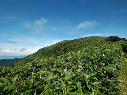 達磨山登山道