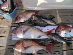 魚種豊富な釣果