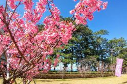 土肥桜2021
